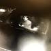 Killeen Police Needs your Help Identifying this Burglar